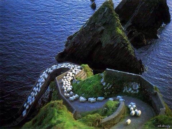 Бараны на шоссе - Ирландия.