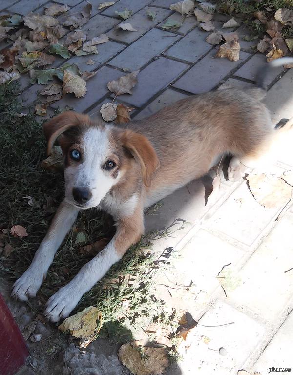 Просто пес с красивыми глазами Вот такое чудо сегодня увидел на остановке.  p.s. прошу прощение за качество, под рукой был только телефон