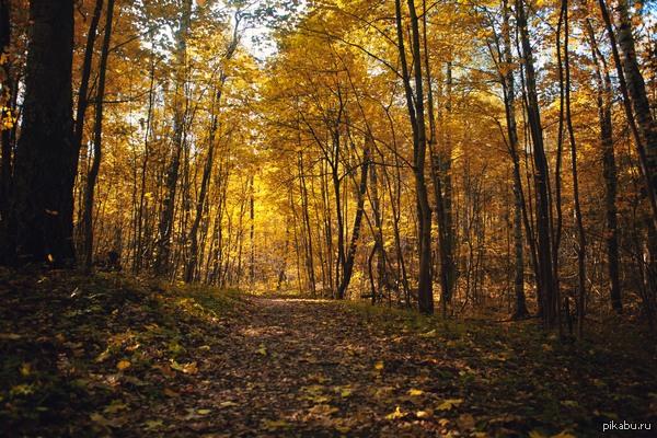 Фото с прогулки Осень начинает брать свое (в Питере по крайне мере)