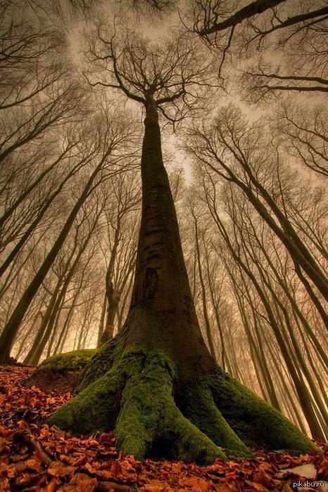 красивые картинки осенний лес