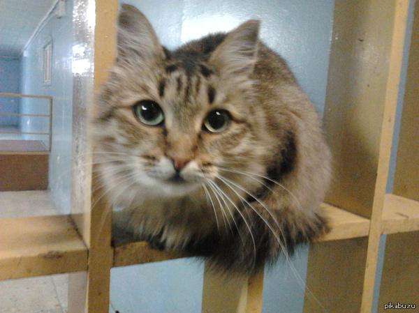 А вот котяра из нашей общаги.