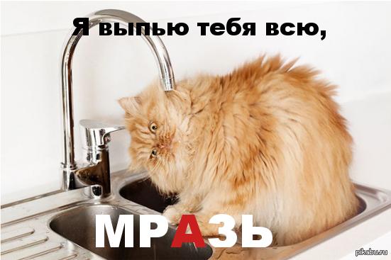 "Злой кот к посту <a href=""http://pikabu.ru/story/samyiy_serdityiy_kot_v_mire_2719276"">http://pikabu.ru/story/_2719276</a>"