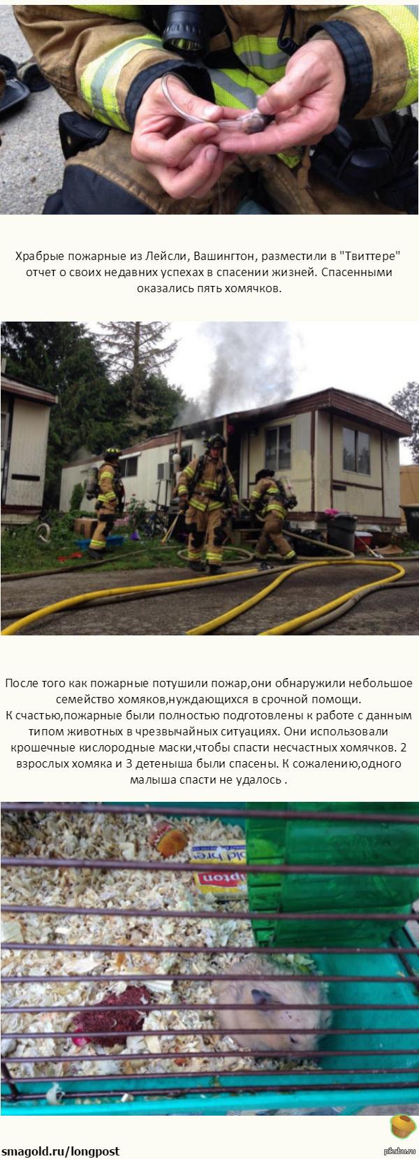Пожарные спасли хомячков при помощи кислородных масок