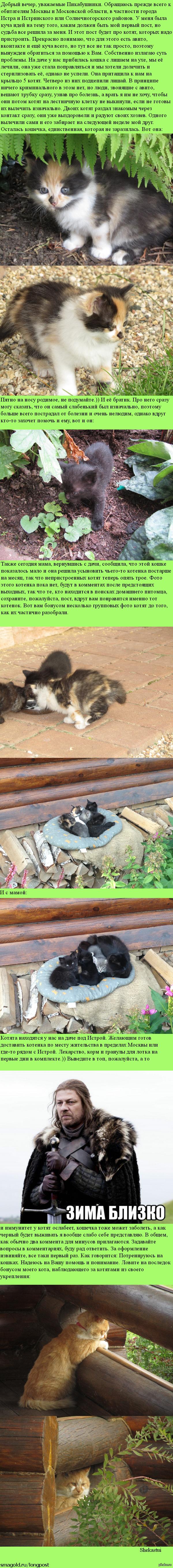 Пикабу, выручай! Нужно пристроить котят. Котята от лишайной матери, однако один пока здоров. Остальных лечим прогресс есть, но люди с авито отказываются сразу, услышав о болезни. Одна надежда на Вас.