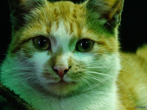 Он просто пришёл погреться в цех простое фото простого, дворового кота, малой правда, месяцев 5-6. Ласковый!