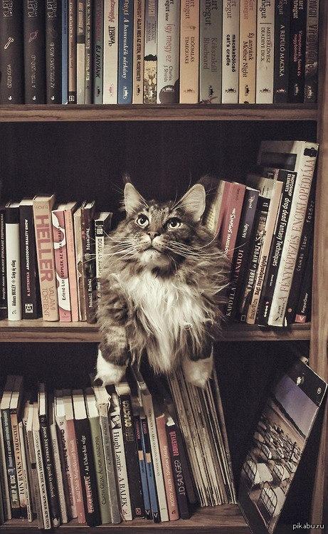 Кот-книголюб!