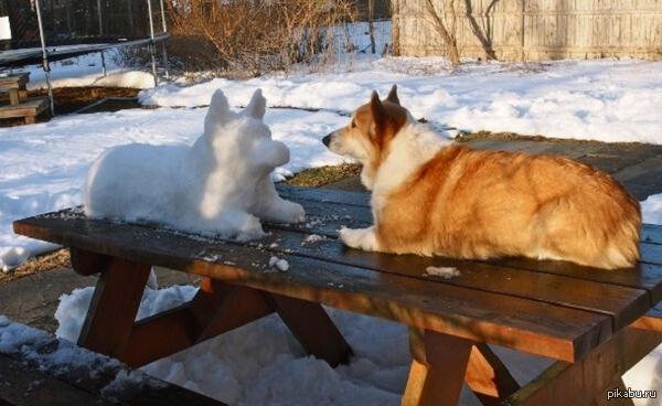снежный собакен и его лучший друг