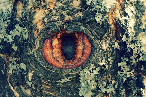 Дерево следит за тобой.