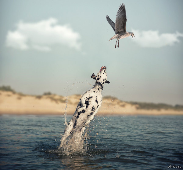 А мне летать охота! Пёс: эх, поймал бы утку-журавля, да синица в лапе мешает...