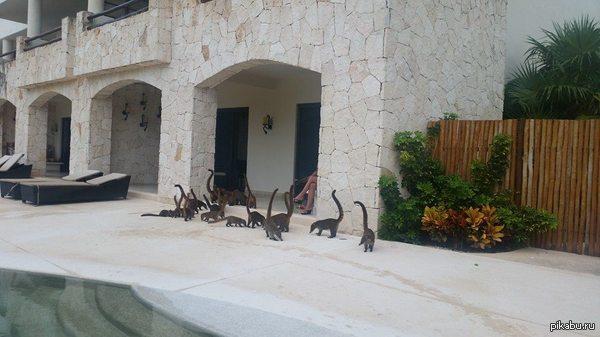 Колония маленьких бронтозавров а, нет, показалось