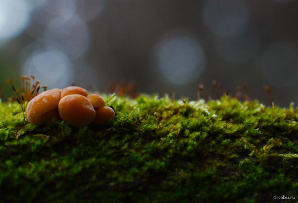 Эта полянка с грибами на ветке в осеннем лесу)