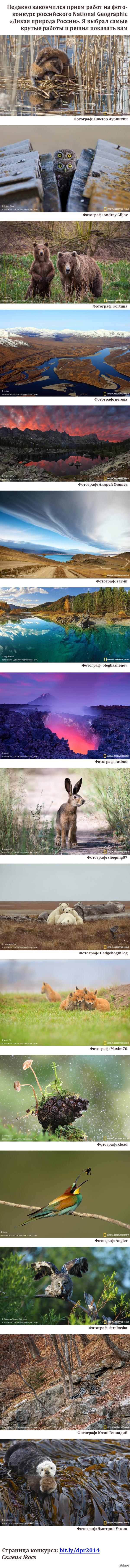 Отобрал крутые фото с Дикой природы России