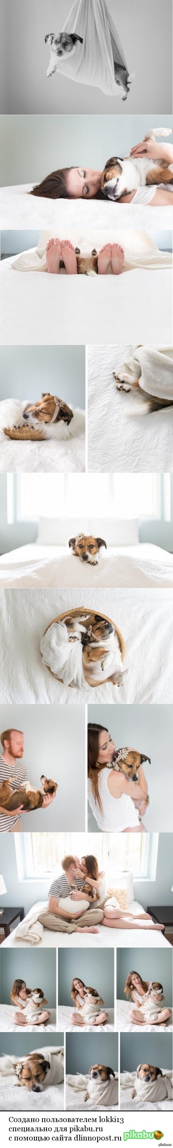 Интересная фотосессия Фотограф Джейми Клаус сняла серию юмористических и милых фотографий своих друзей Яна и Чейз Ренегар с их собакой в стиле, традиционном для съемки новорожденных