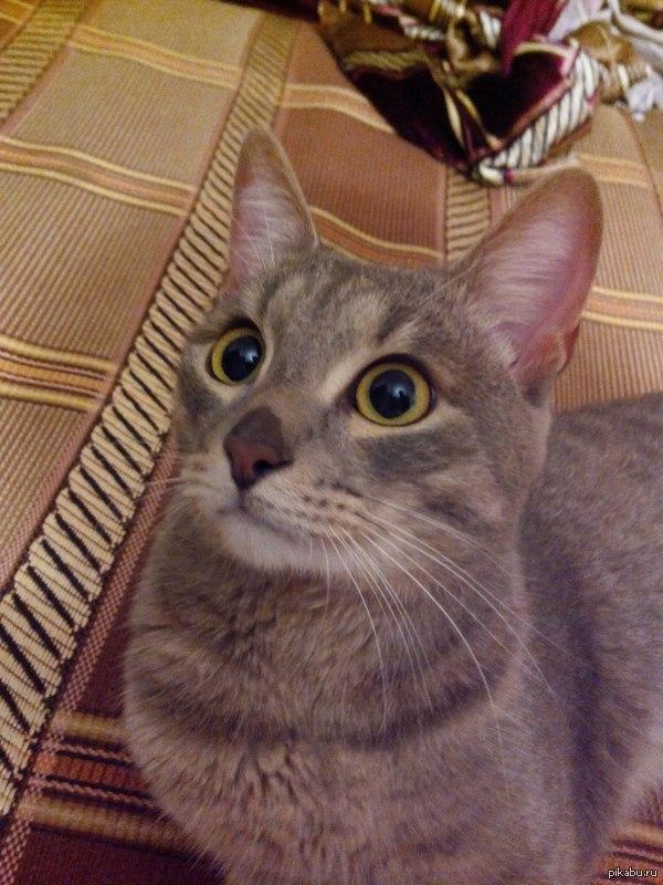 У быстрого кота, нос мокрый сверху.