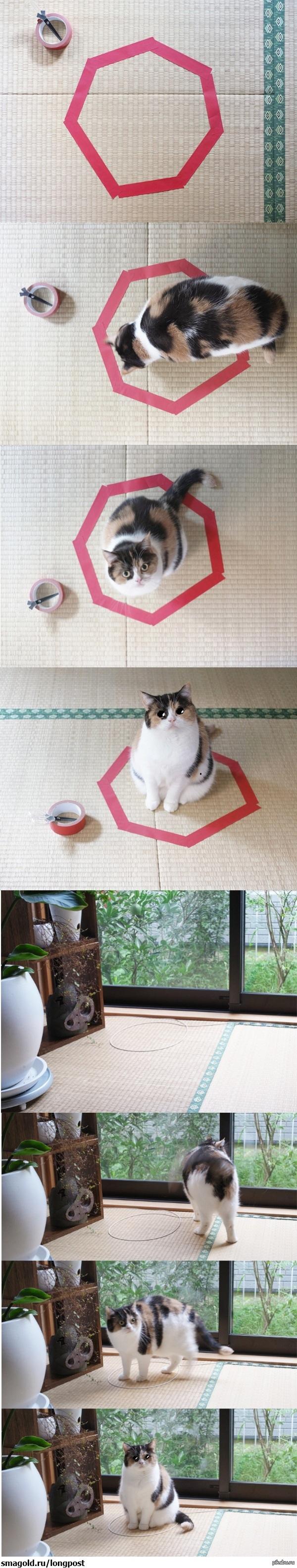 Игры ловушки для котов