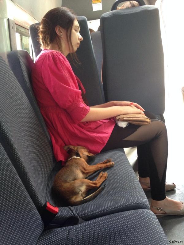 Ехал домой с учебы Каждый раз, когда на остановках заходили новые пассажиры, никто так и не решился сесть на место собакэна ))