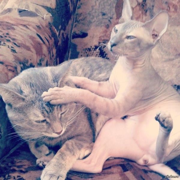 Котик гладит котика) Милые котейки моего друга)