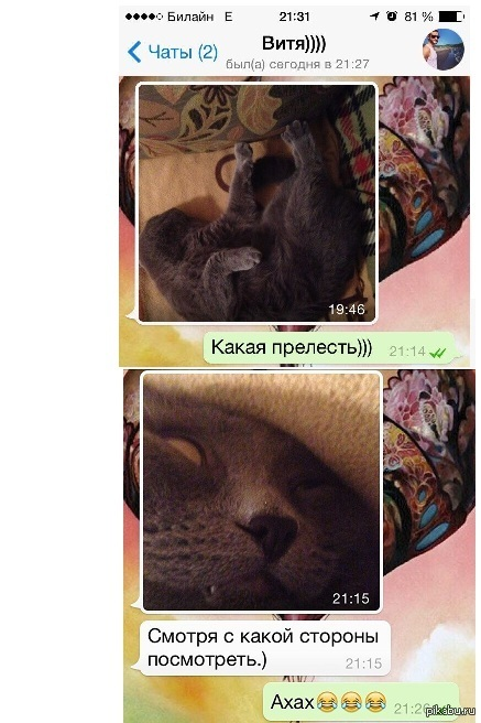 Смотря с какой стороны посмотреть) немного няшных котиков)