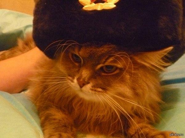 Семен Иринович Пушистый Очень серьезный кот