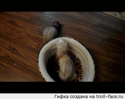 Всё своё ношу с сбой)