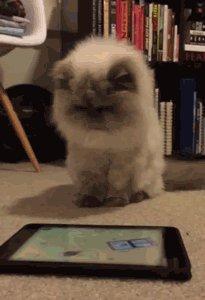 Кот втыкает в планшет Он напоминает мне эвоков.