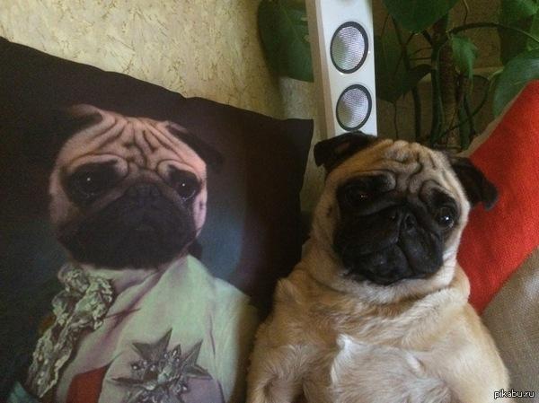 """Правильный вызов котам! в ответ на пост <a href=""""http://pikabu.ru/story/govoryat_zdes_lyubyat_kotov_tak_poprobuem_brosit_vyizov_2780456"""">http://pikabu.ru/story/_2780456</a>  ухаживать и следить надо за собакой"""