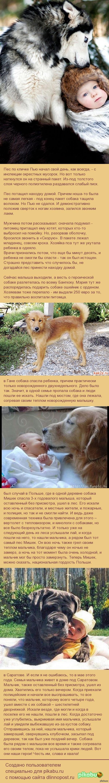 Собаки, которые спасли детей