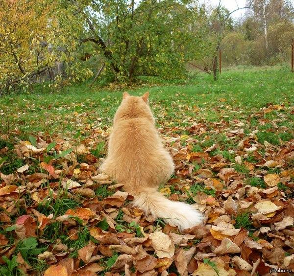 Котейка и листья