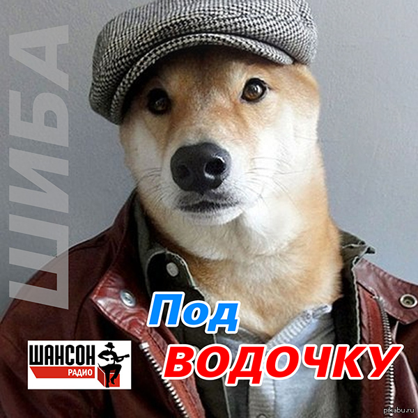 Пёс выпустил блатной альбом Пёс Бодхи породы Шиба Ину выпустил блатной альбомчик