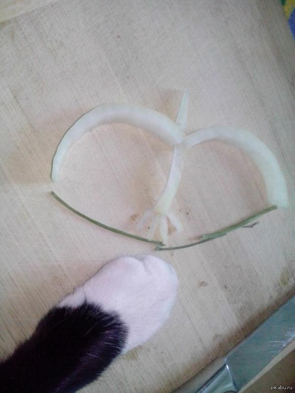 Мой кот сделал лук:D А что сможет ваш?