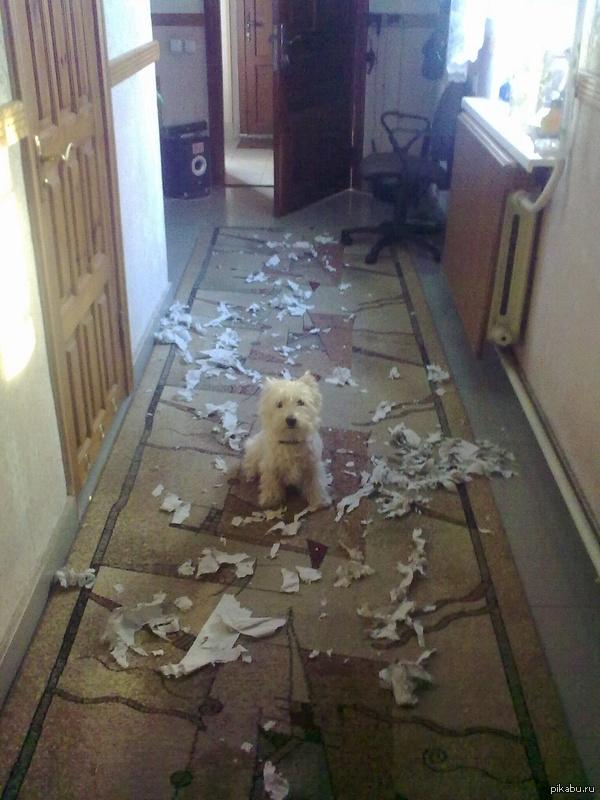 Когда с собакой не играешь, она сама всегда найдет чем себя занять ;) Заставил ее так сидеть, пока ходил за телефоном )