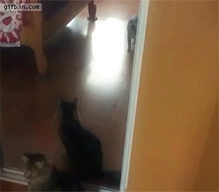 Гибкости этому коту не занимать только бы мозгов побольше