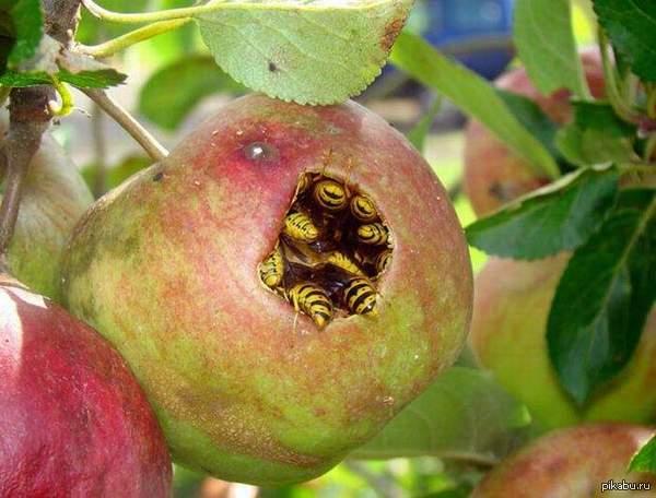 Сенсация!!! BeeLine покупает Apple спер честно.