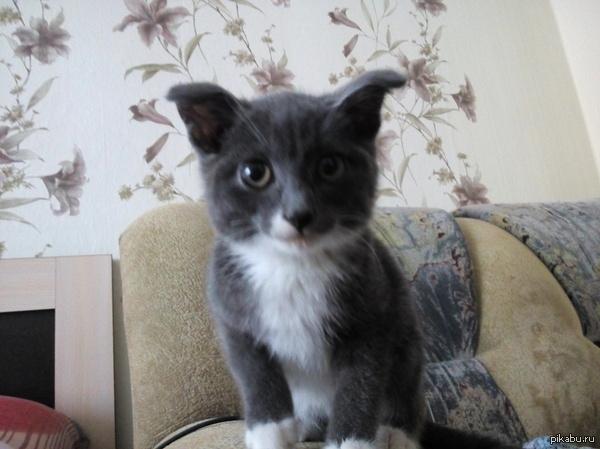 Маленький котик ищет дом!!! Подобрал утром у двери гаража, уже почти вмёрз в землю. Алтайский край, Рубцовск и окрестности, котику нужен дом!! Поднимите, пожалуйста. Комменты для - добавил