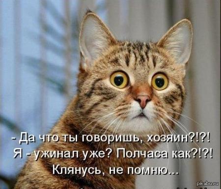 Ох уж эта кошачья амнезия!)))