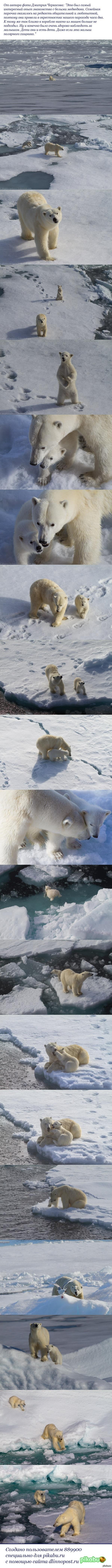 Белый медведь. Мама и малыш =)