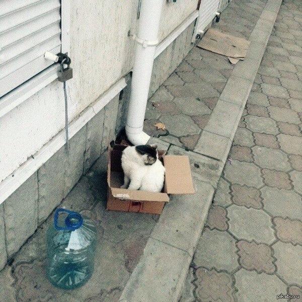 Ловушка для кота в действии