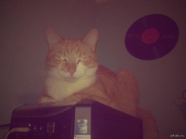 Моё домашнее зло)) Пикабу же любит котиков?) Решил показать моё домашнее зло)) В комментах ещё два фото :)