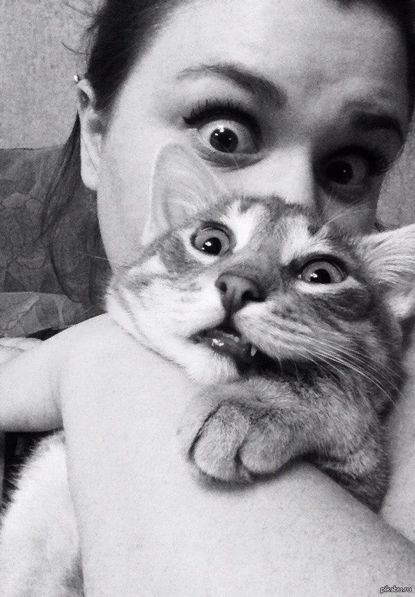 Ответ на вопрос: Почему коты любят валерьянку?