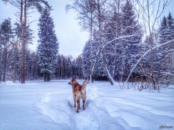 Другая Москва Москвичи, негоже нам жаловаться на снег, чай не Майами. Будьте счастливы, как мой щенок)
