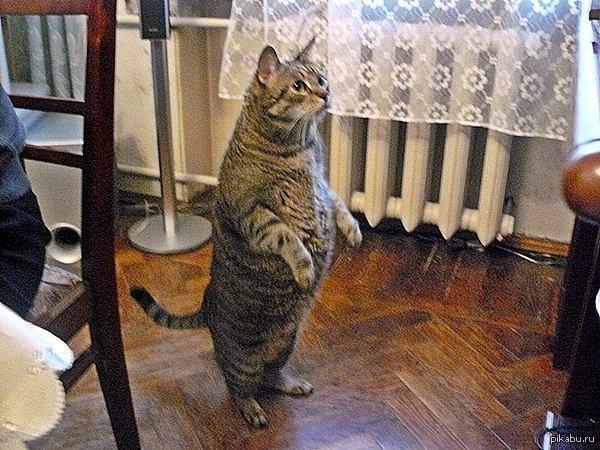 Просто кот Василий.