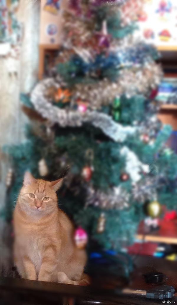 Мой котик! Жаль, пропал, не найти. Есть еще две кошки. С наступающим!