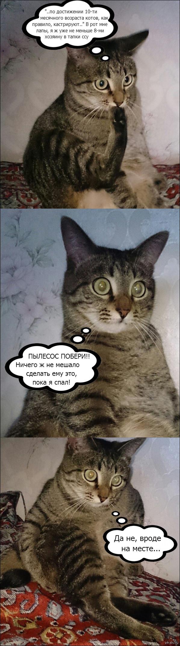 "Неспокойные думы по мотивам <a href=""http://pikabu.ru/story/koteyka_zadumalsya__2957947"">http://pikabu.ru/story/_2957947</a>"