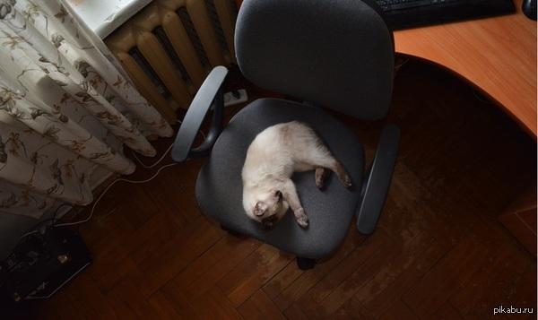 Теплое место. Стоит оторвать задницу от стула и она уже там. И так всегда.