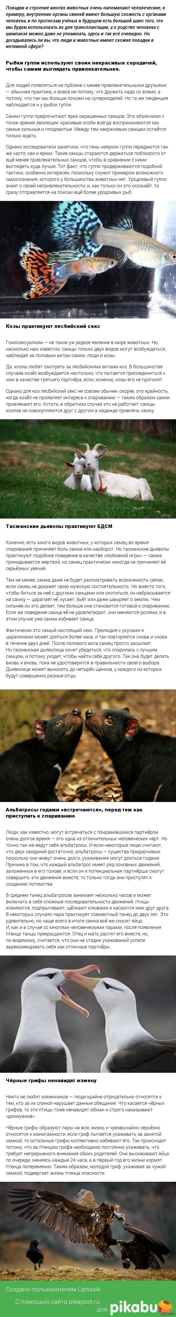 Животные, сексуальная жизнь которых напоминает человеческую. :) Клубничку не надо, думаю?