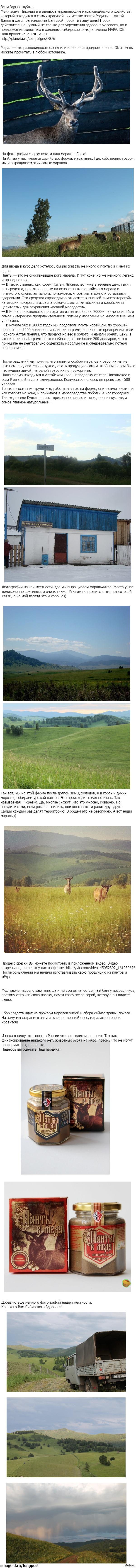 Покорми Марала! Мой первый длиннопост. Рассказ о выжившем хозяйстве на Алтае. А именно о маральнике. Более подробно по ссылке - http://planeta.ru/campaigns/7876