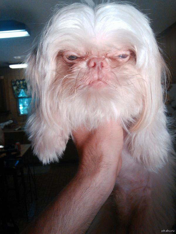 """Эта собака похожа на Фалькора из """"Бесконечной истории"""""""