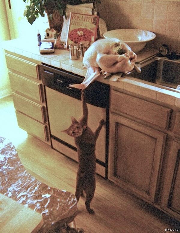 homemade feral cat repellent