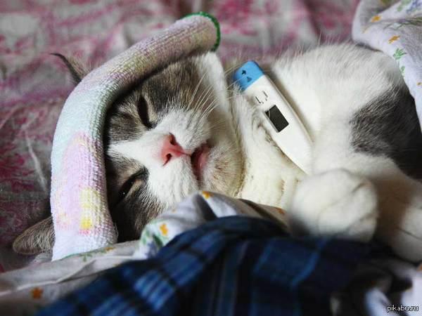 Cat headache symptoms