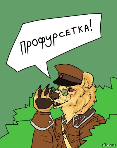Мем про медведя и шлюху